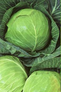 Какие фрукты созревают. Сезонные овощи и фрукты осени: польза и варианты приготовления